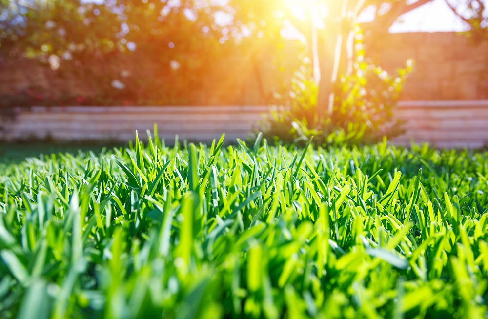 Henderson Fertilizing Lawn Care