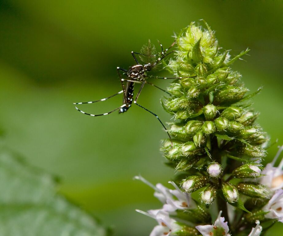 Mainline PA Mosquito Control