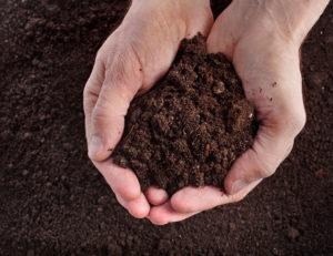 soil assessment